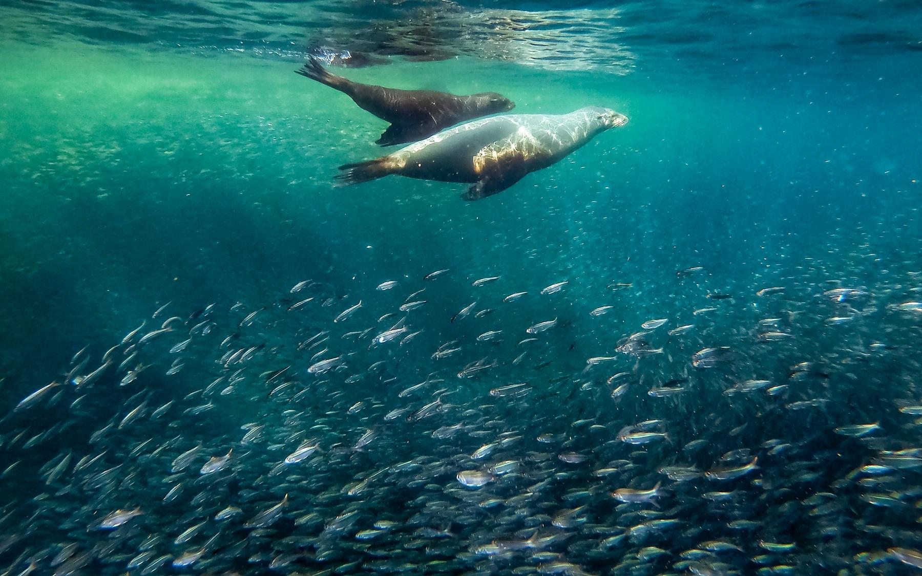 sea lions in La Paz, Mexico