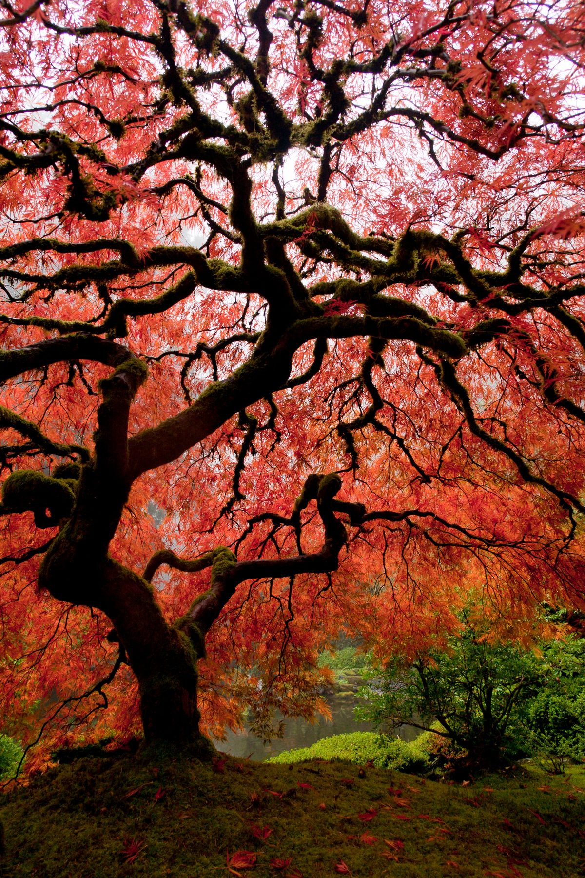Tree - best time to visit Japan