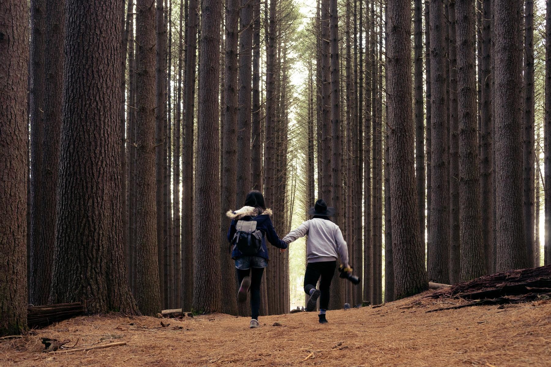 Красивый лес в Ленобласти для романтической поездки на выходные