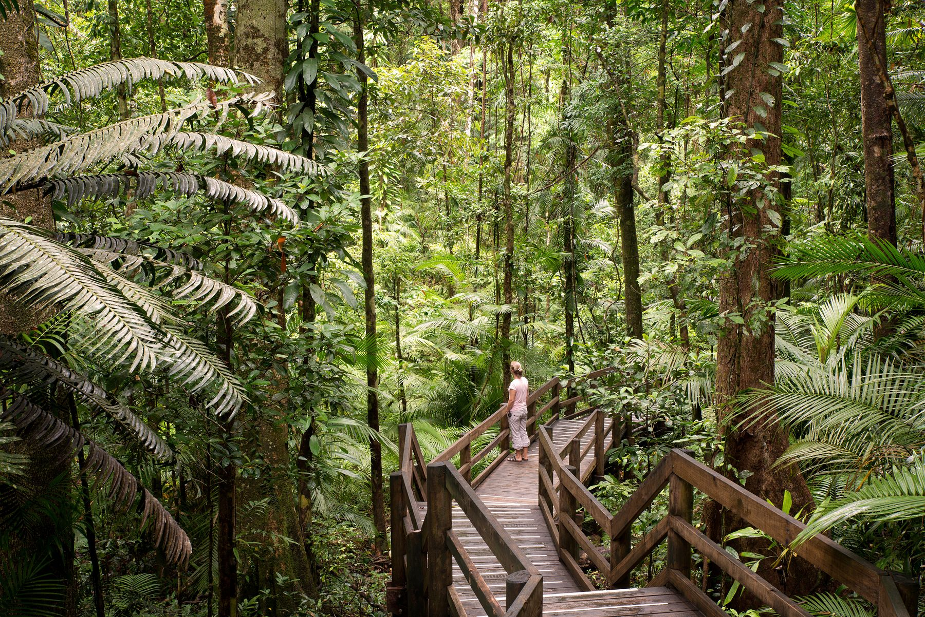 With the Queensland borders open, you can explore the Daintree Rainforest