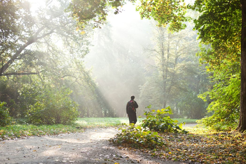 Πεζοπορία στο δάσος