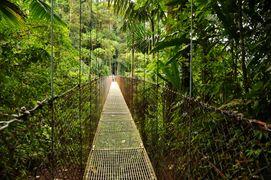 Джунгли Коста-Рики