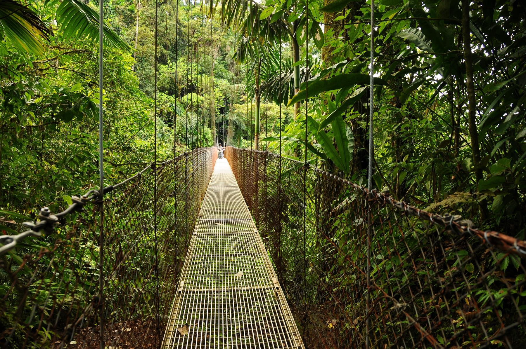 Wildnisreisen: Dschungel-Safari in Costa Rica