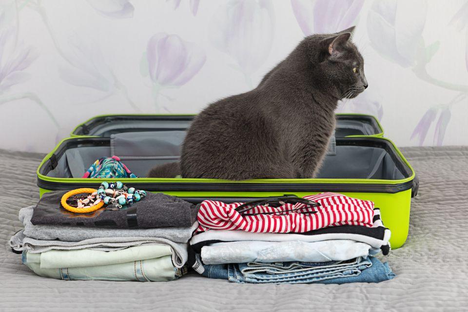 Πακετάρετε σωστά τις αποσκευές σας easyJet