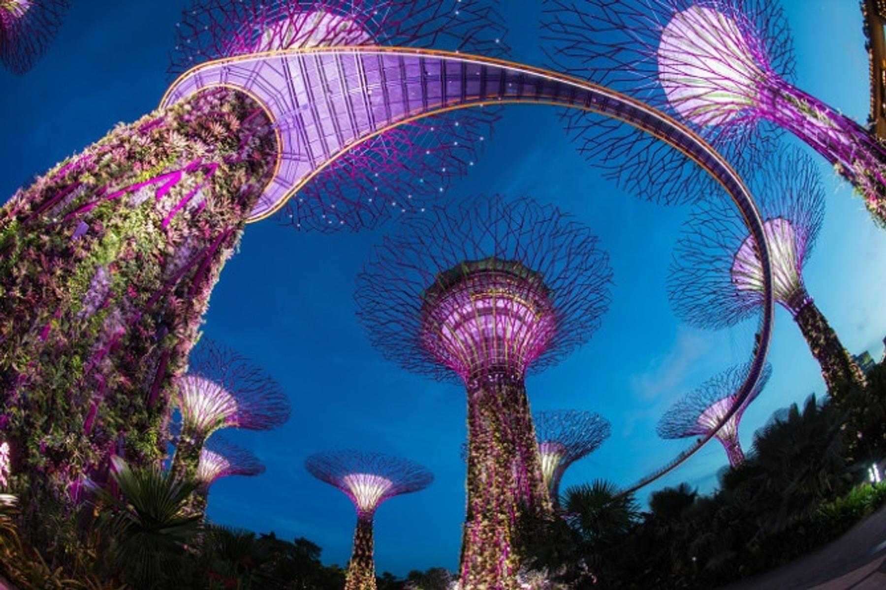 Главная достопримечательность следующего фильма — фантастические деревья в Сингапуре