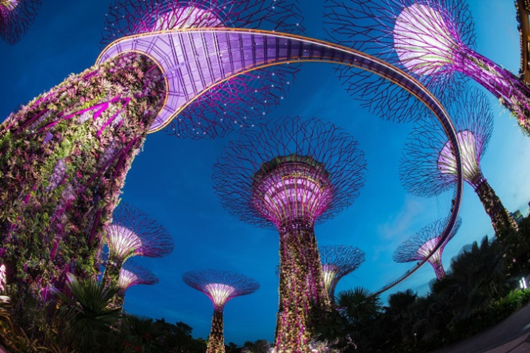 A featured attraction in travel movie - the living trees in Singapore