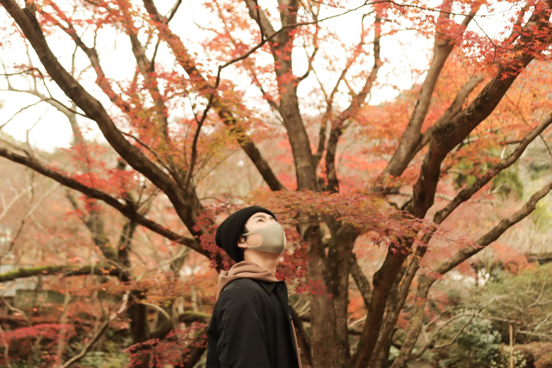 Solo traveler looking up at a colorful tree in Japan, one of the best places to travel alone.