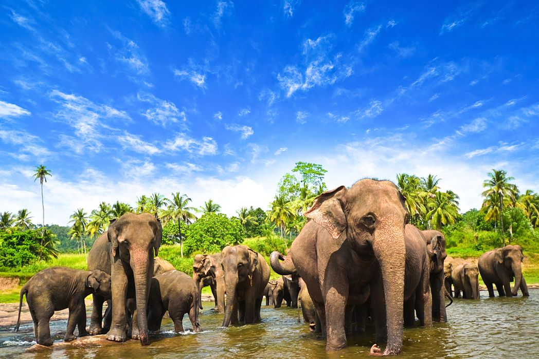 Elephants in Kandy - when is the best time to visit Sri Lanka