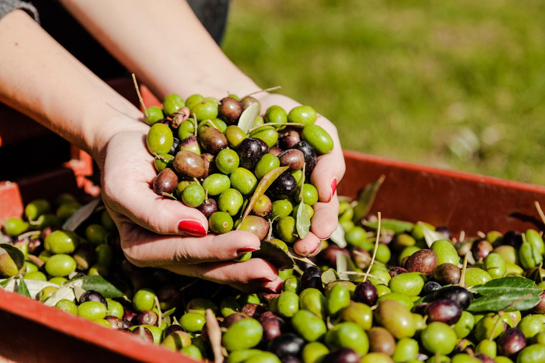 Испанский фестиваль оливок