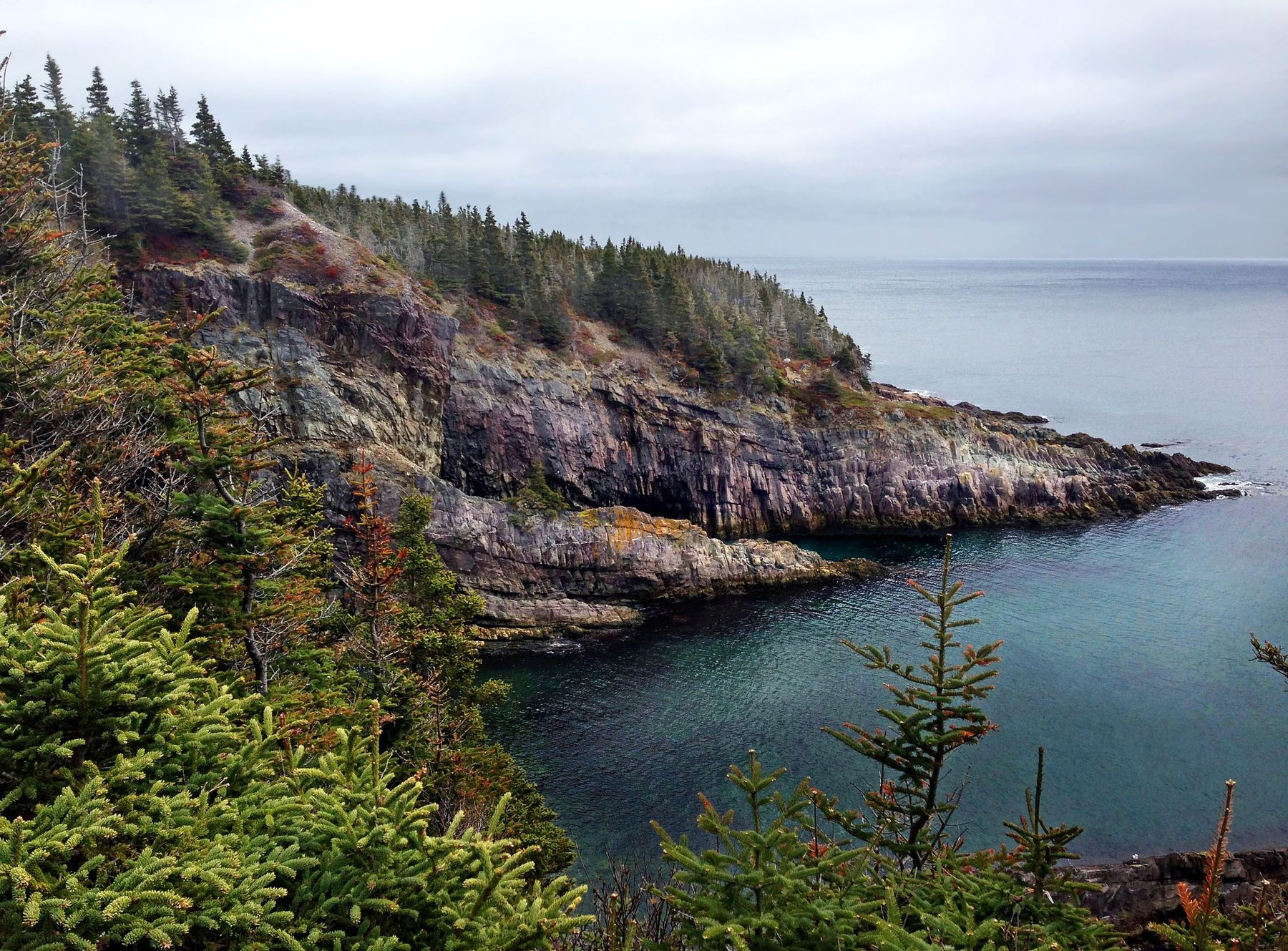 rugged coast and forest of the Avalon Peninsula in Newfoundland