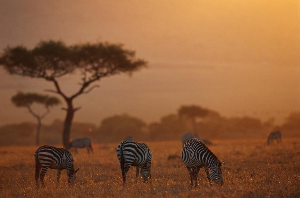 Safari in africa - tramonto in un parco