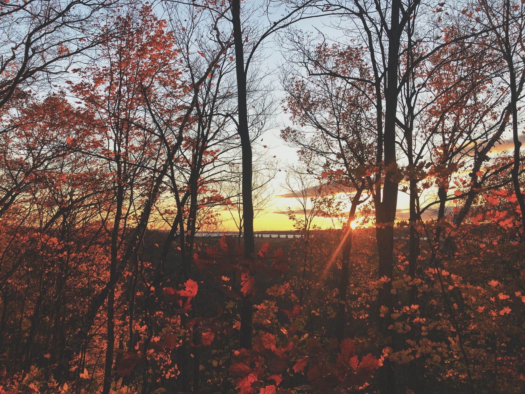 the fall colours by sunset in Ile d'Orleans, Quebec