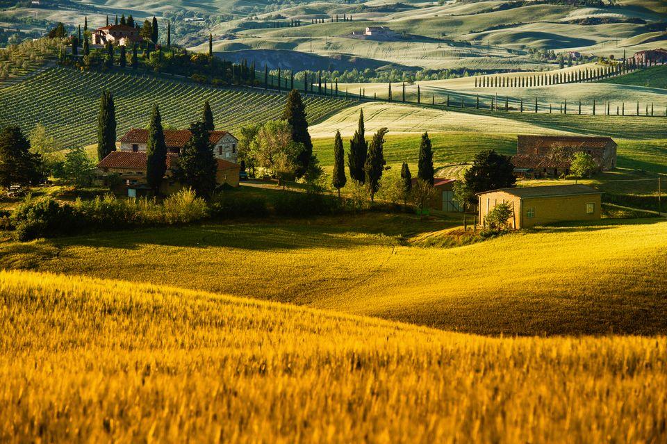 Изумрудные поля в Тоскане, Италия