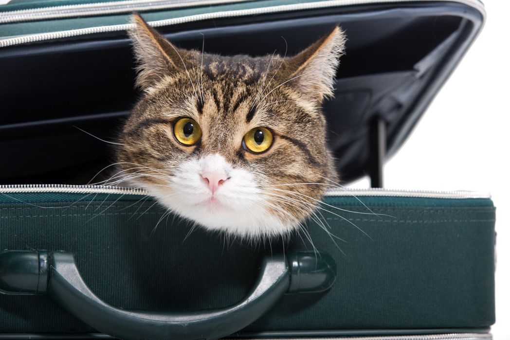 Cat in a bag - Flight approved pet carriers