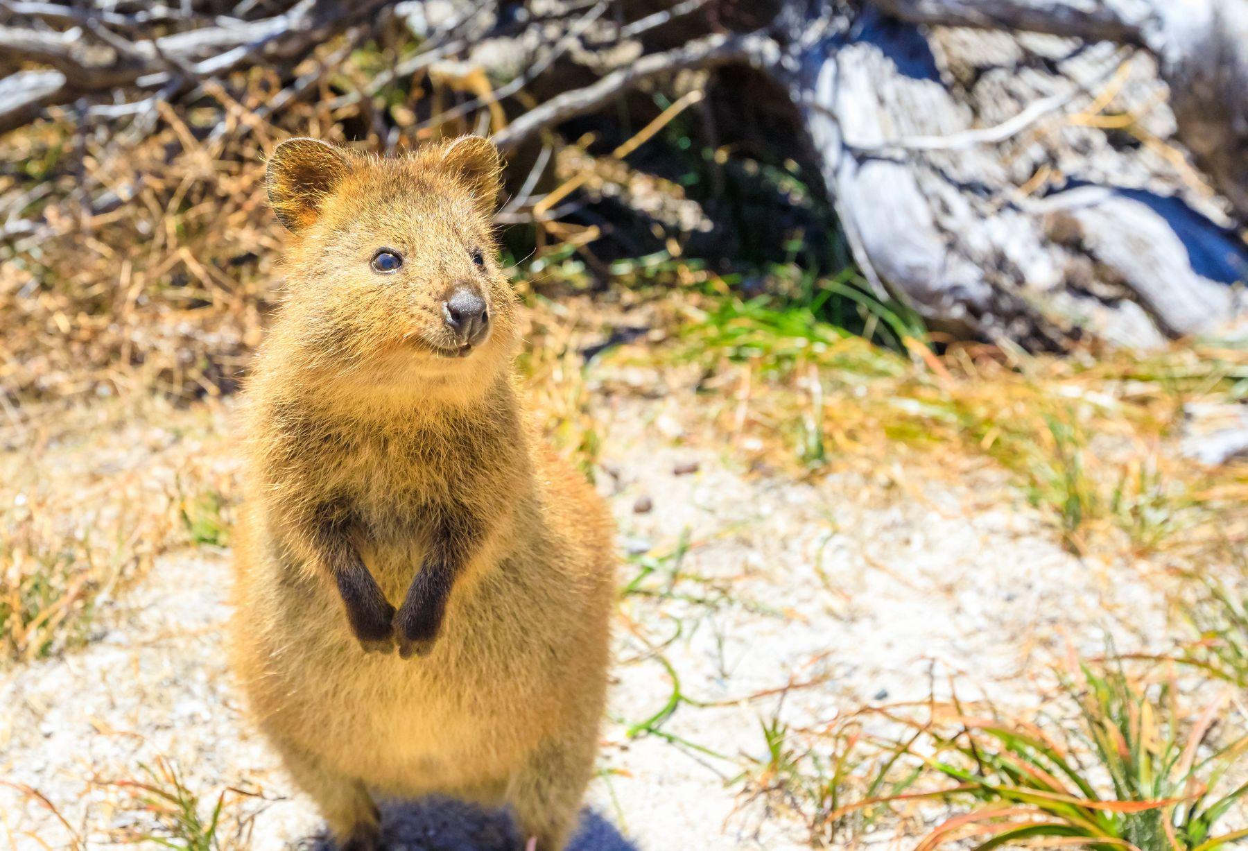 Best places to travel in March: Rottnest Island