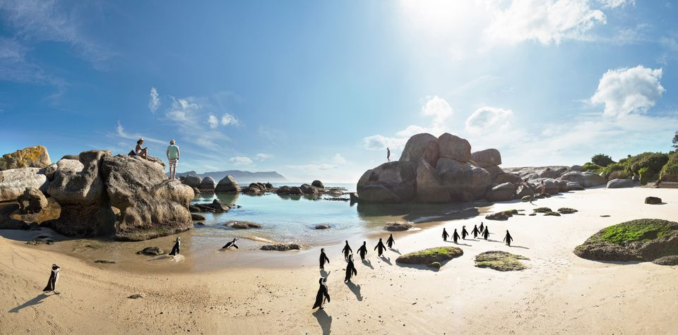 Die Top 10 Aktivitäten in Südafrika: Sightseeing in Kapstadt und Umrundung der Kap-Halbinsel