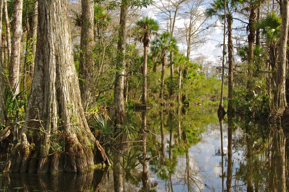 Die schönsten Nationalparks der USA: Everglades Nationalpark, Florida