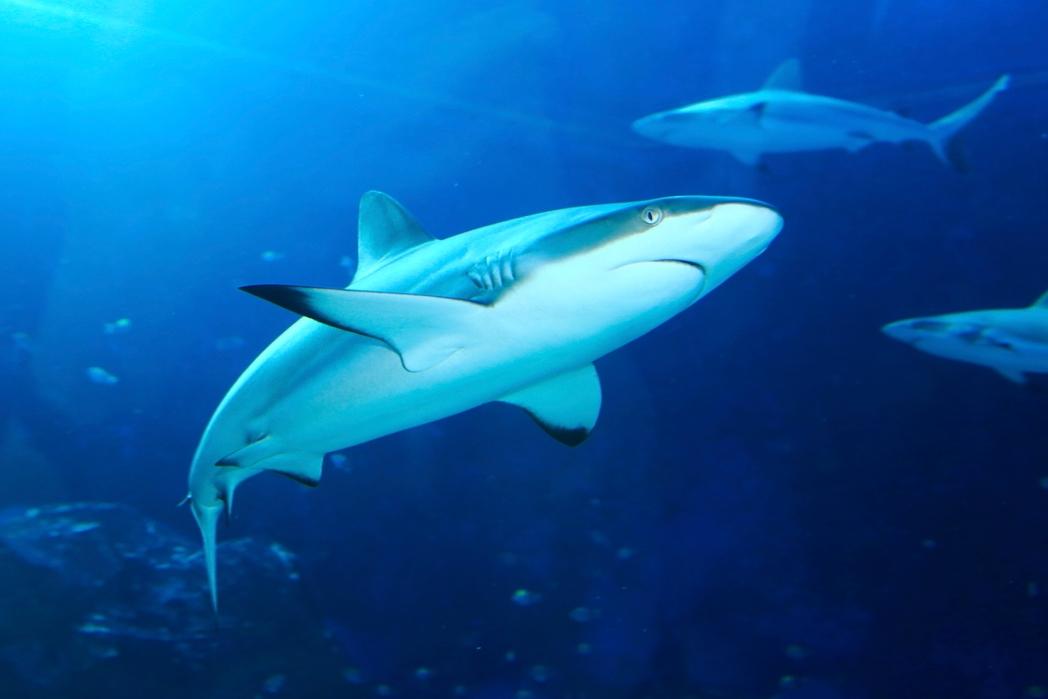 Καρχαρίες στο εντυπωσιακό στο S.E.A. Aquarium - ταξίδι στη Σιγκαπούρη