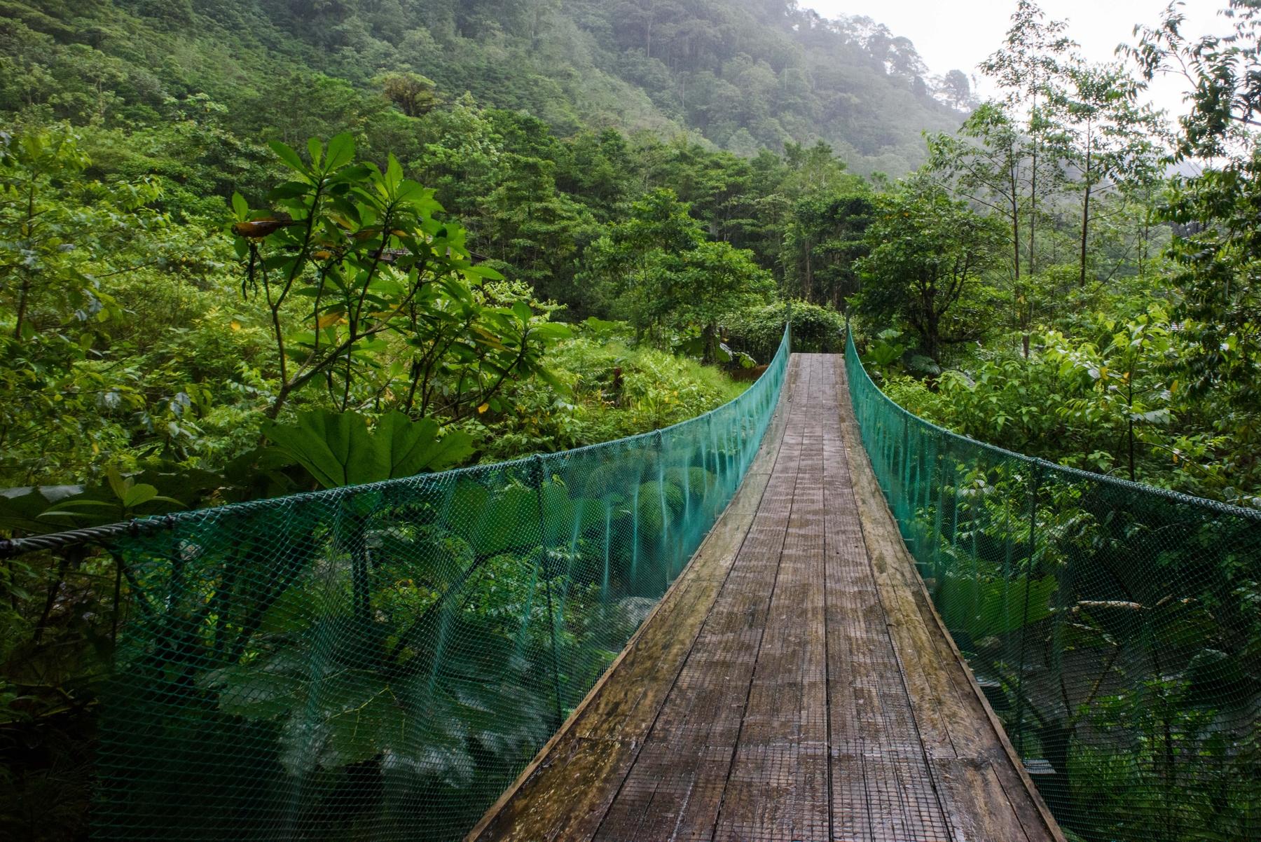 suspension bridge in the rainforest cloud forest jungle, Alajuela Province, Poas, Costa Rica