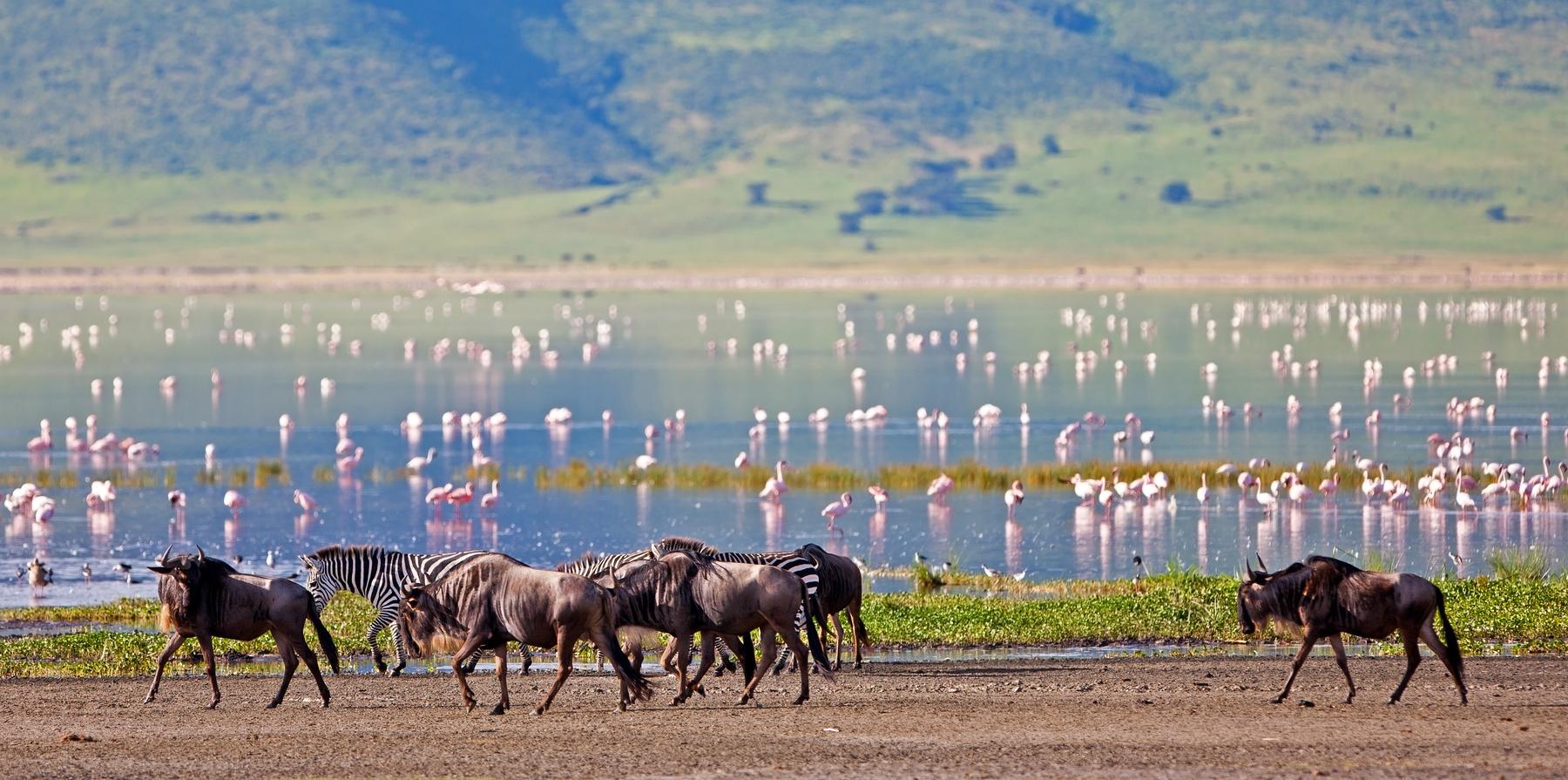 Миграция животных в Танзании