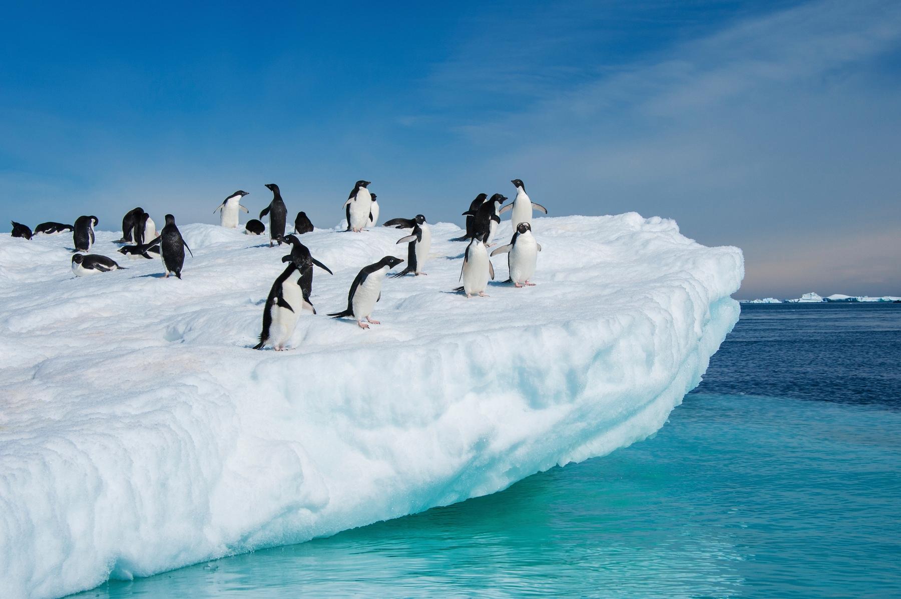 Пингвины в Антарктике. Самые отрезанные от цивилизации места мира