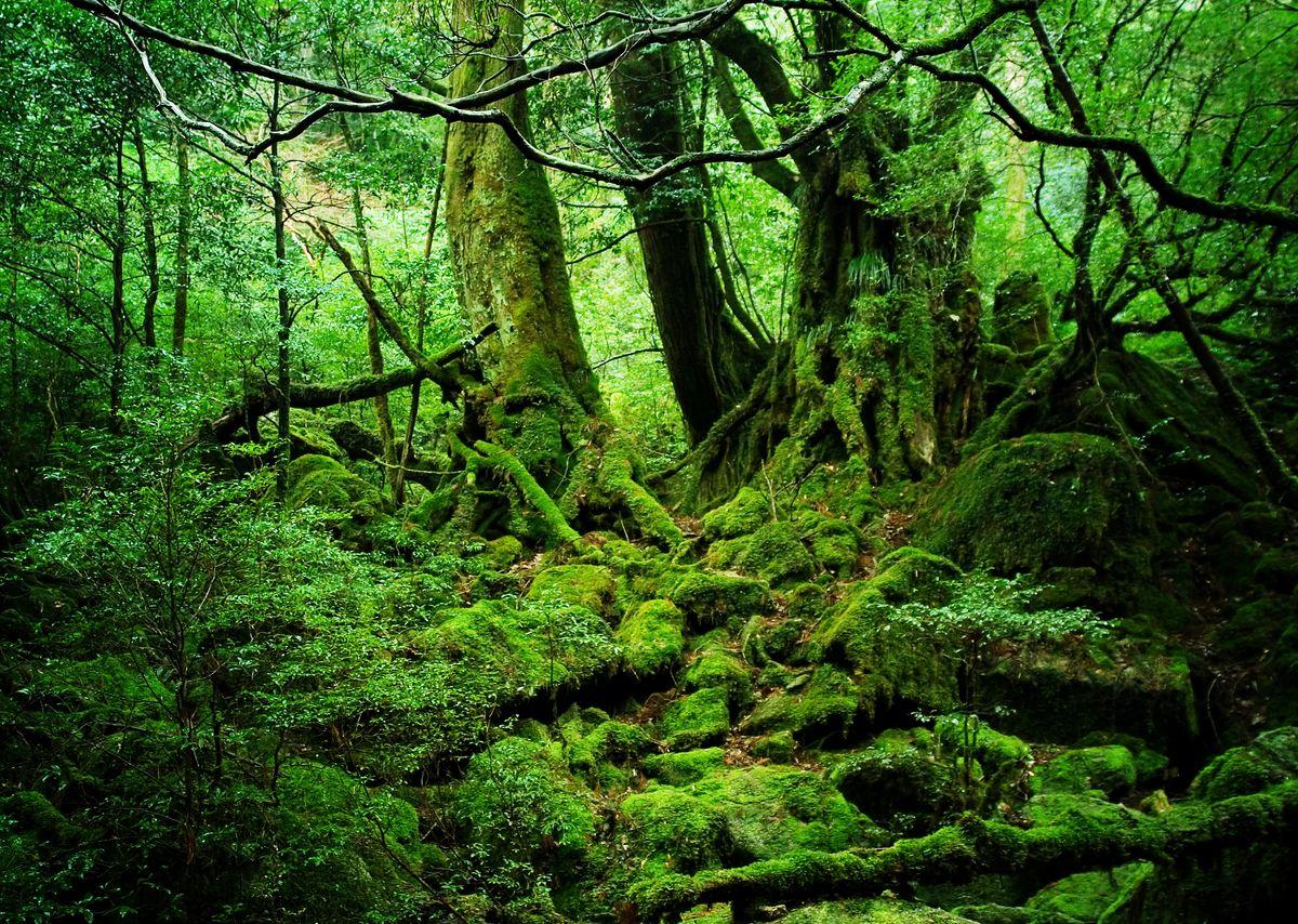 Die schönsten Inseln Japans: Yakushima, Satsunan-Inseln, Nansei-Inselgruppe