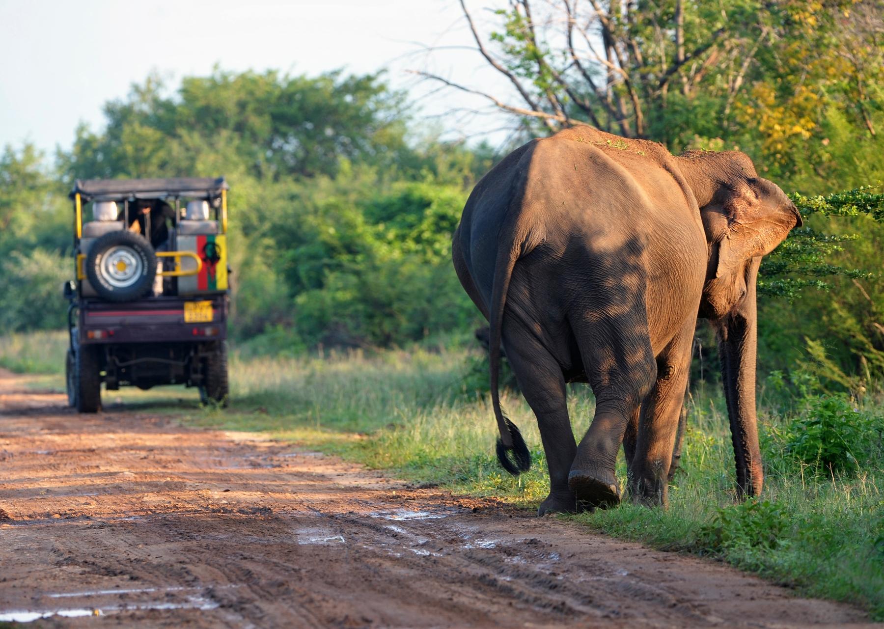 safari in famiglia