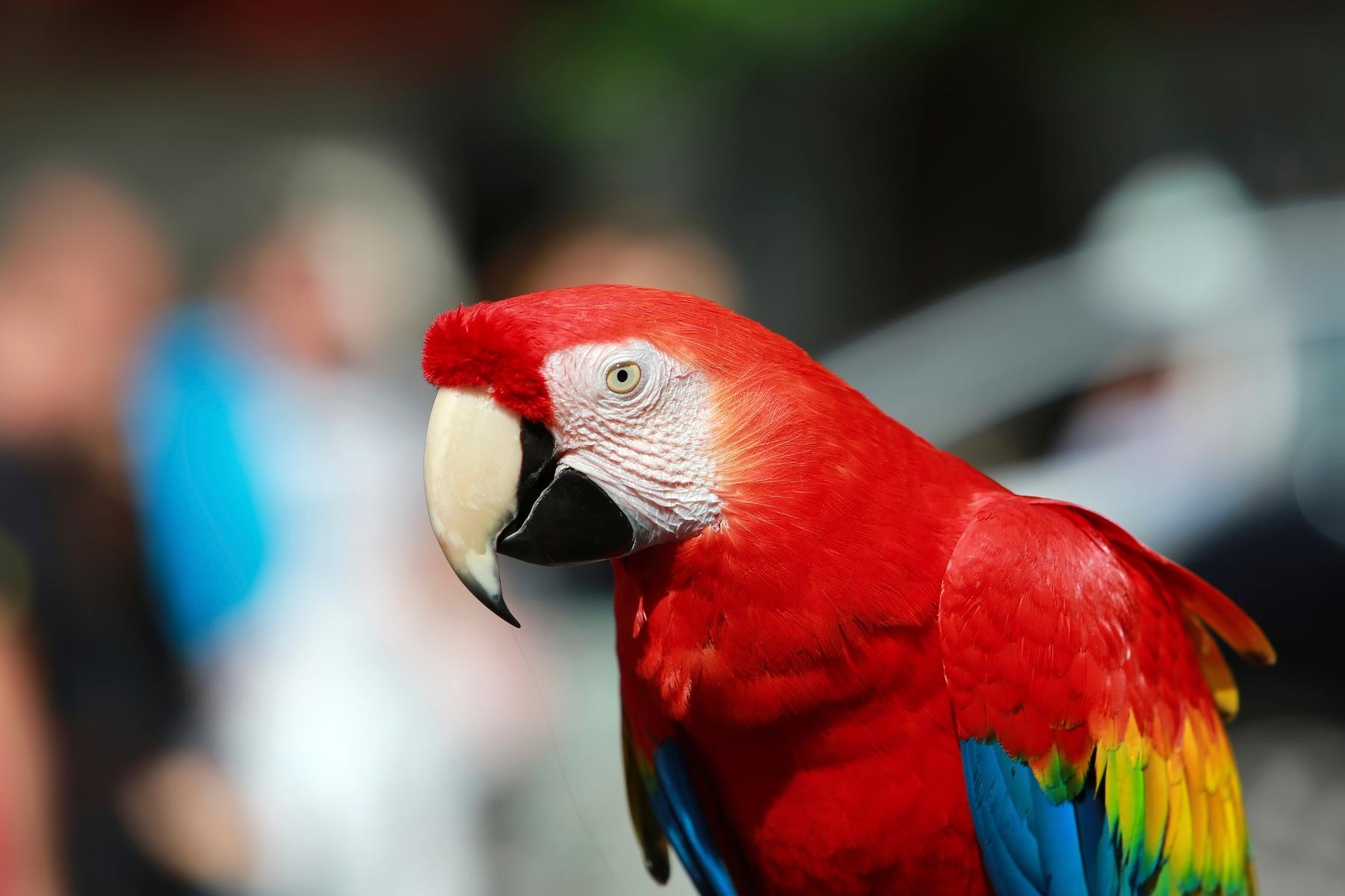 Der Kobelt Zoo in Frankfurt ist ein beliebtes Ausflugsziel