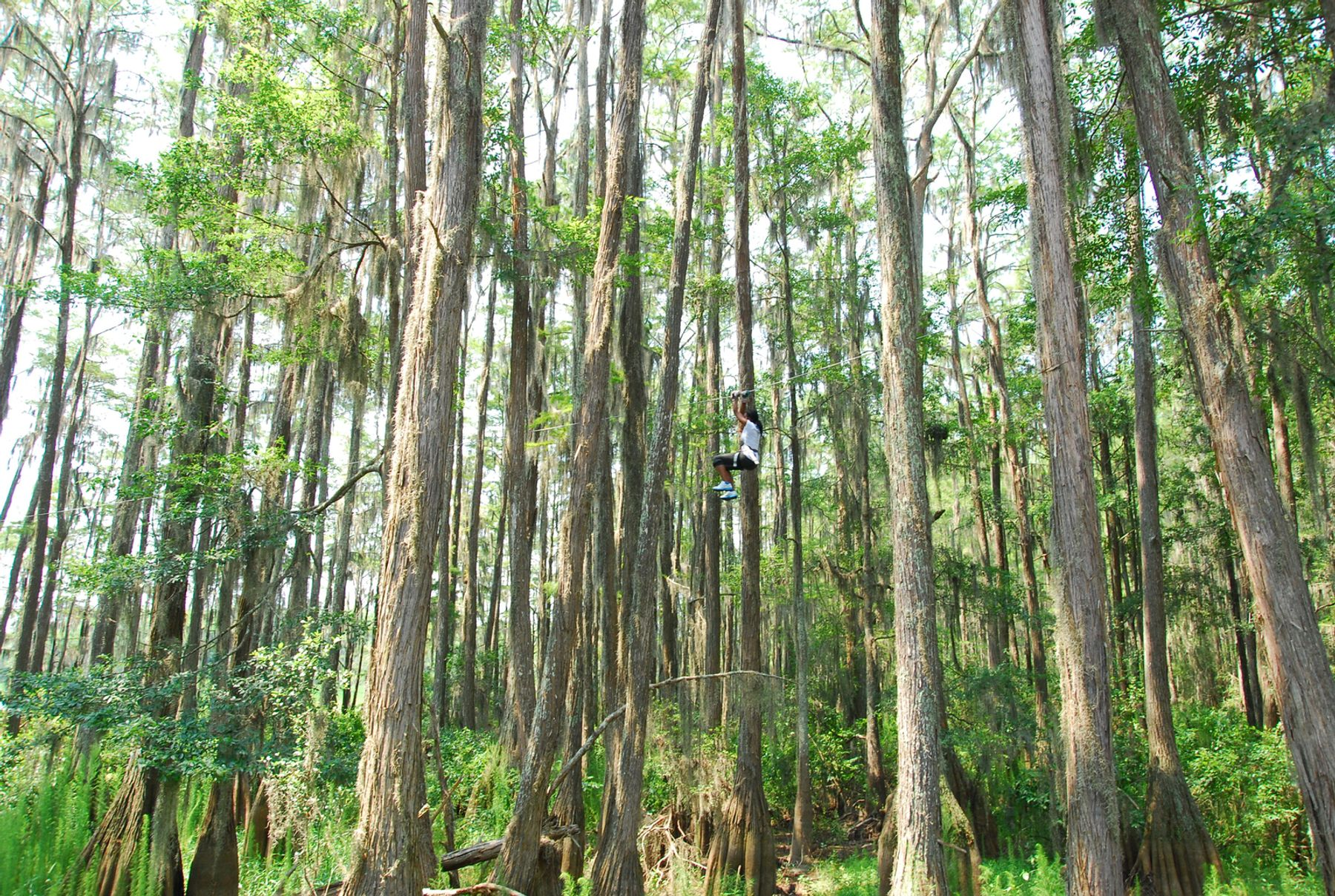 Zipline through the trees in Tallahassee