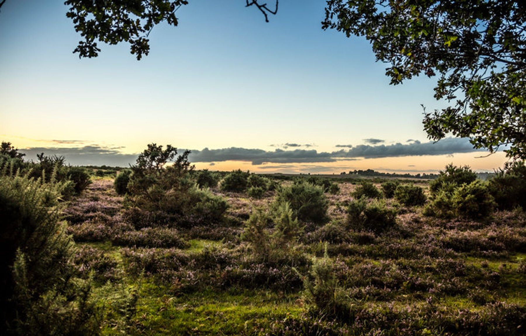 Other wordly landscapes of the New Forest, England