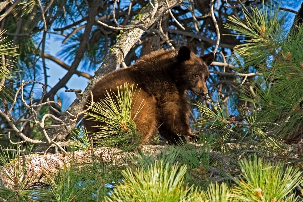 Η προστατευόμενη αρκούδα στο Νυμφαίο