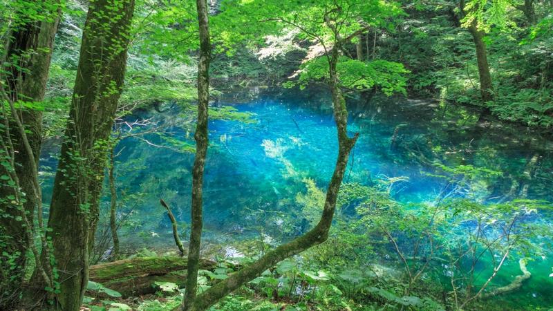白神山地(青森) 神秘的な青に魅せられる