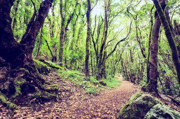 Parque Nacional de GArajonay en La Gomera Canarias