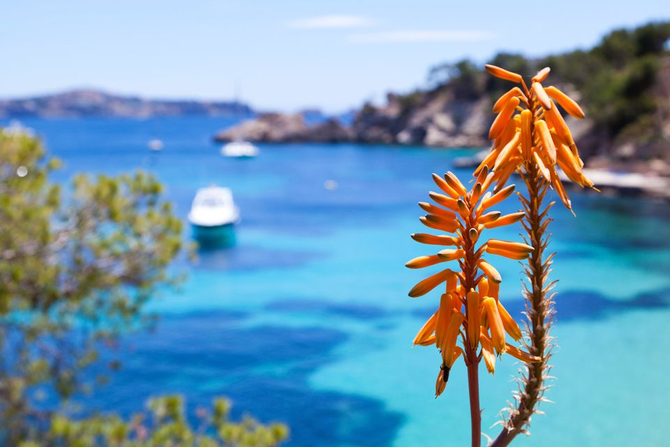 Focus on an orange flower with the sea in the background in Majorca