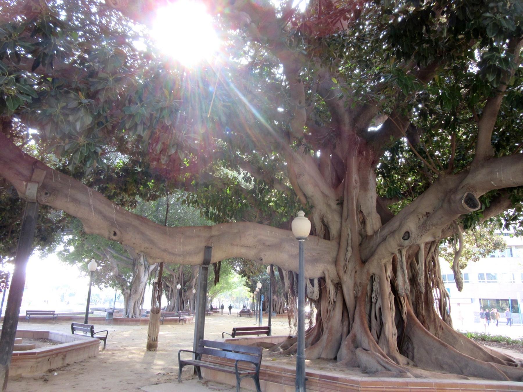 Parque de Canalejas Alicante