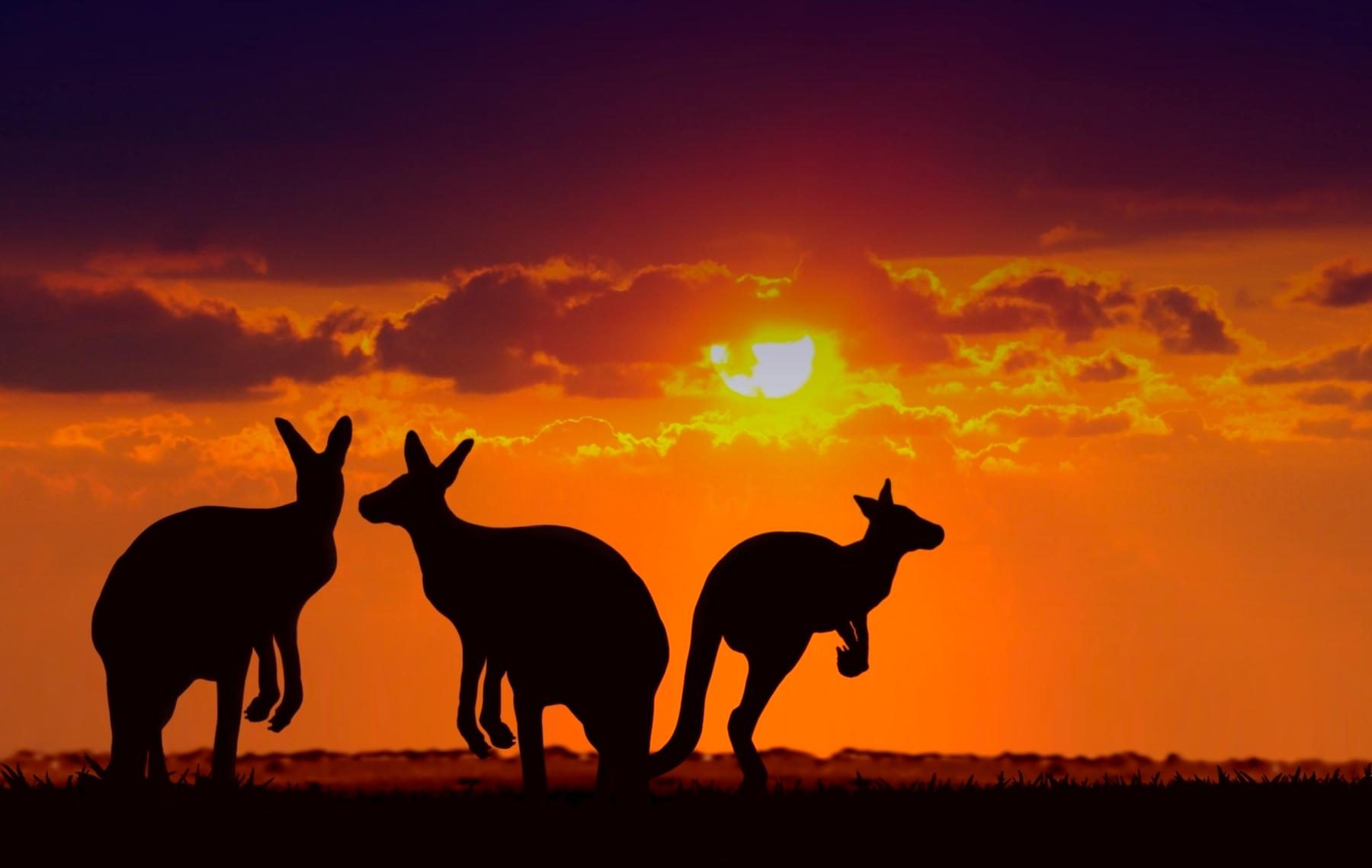 Flights to Kangaroo island