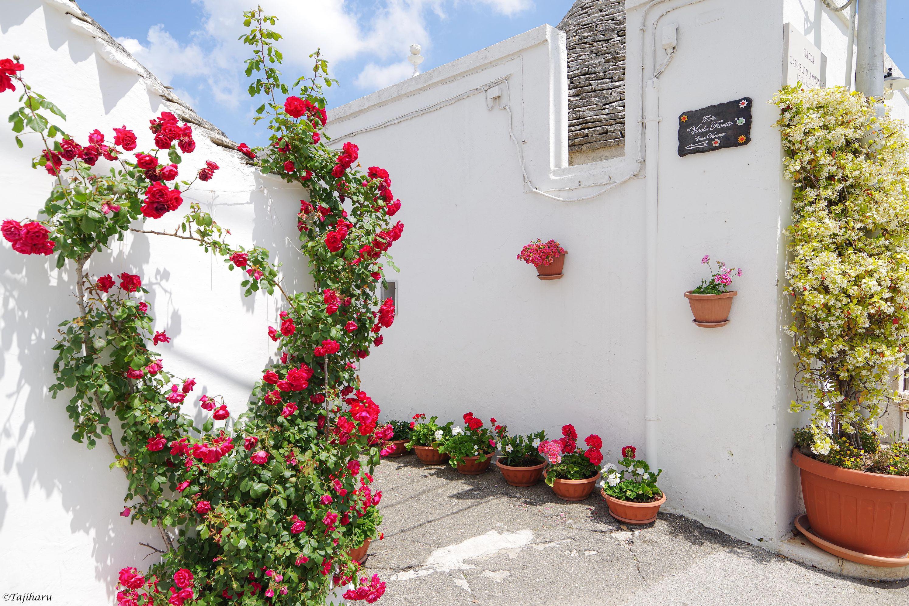 アルベロベッロ モンテ・ペルティカ通りの脇の細い小径 白い壁と花