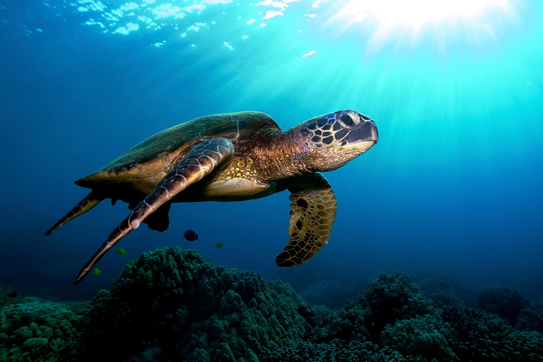 Sea turtle at Lady Elliot Island