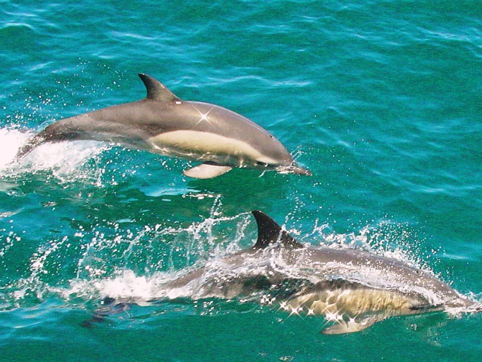 ou nager avec les dauphins a Miami