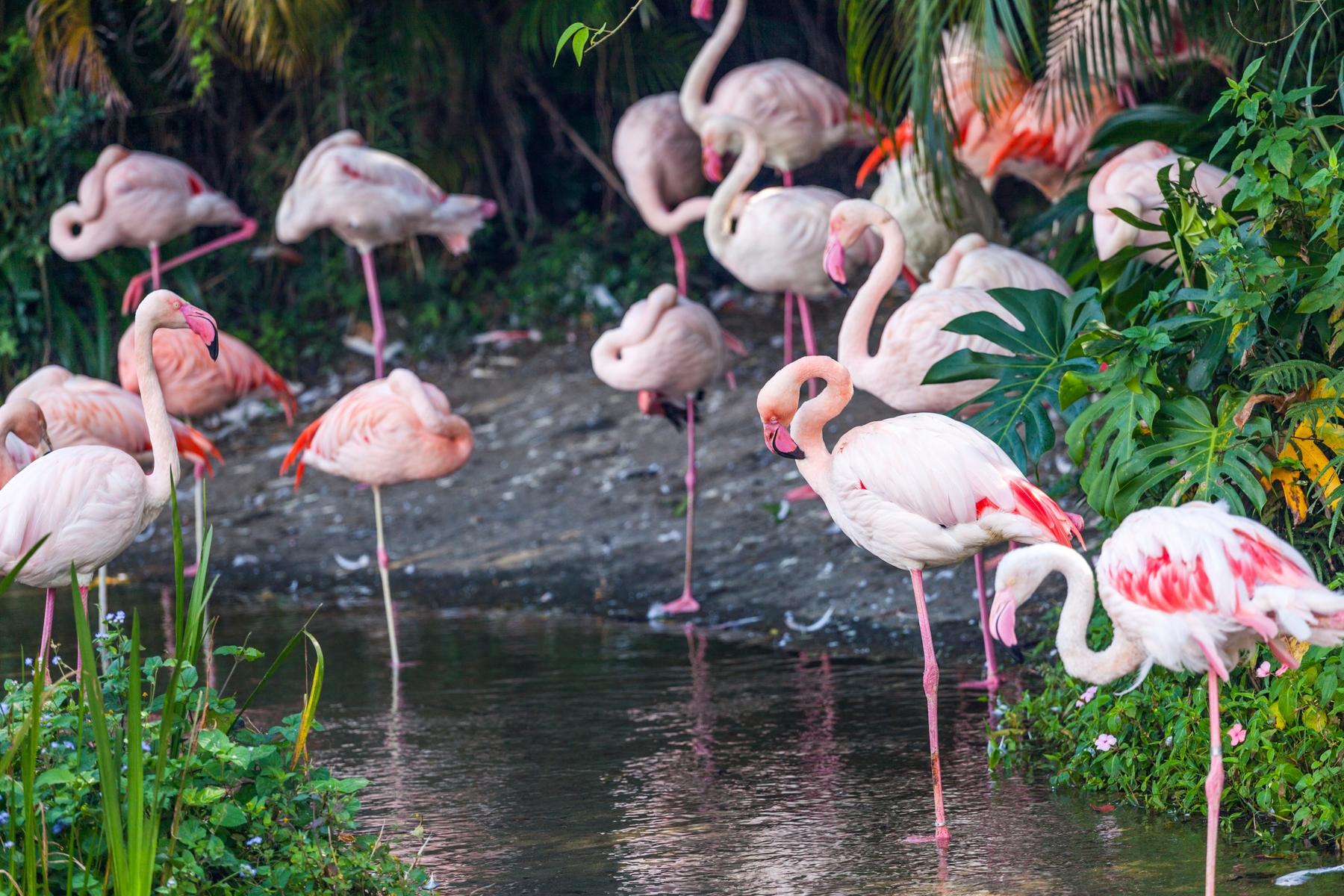 Onbekende plekken in Nederland Zwillbrocker Venn Flamingo