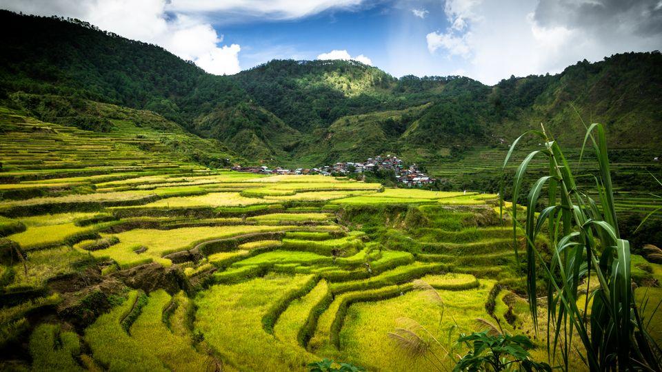 Die schönsten Reiseziele der Philippinen: Reisterrassen von Banaue, Luzon