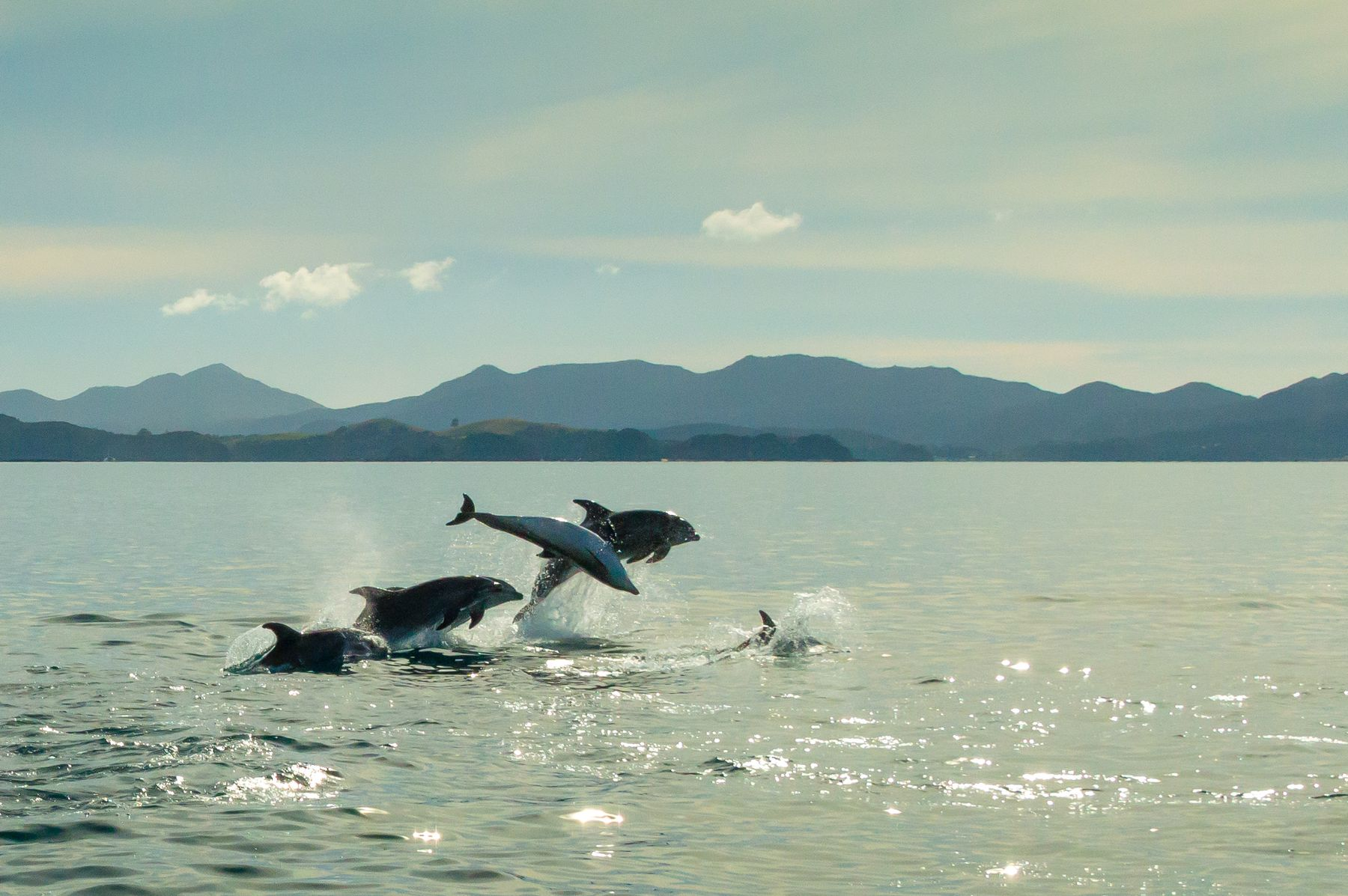 four dolphins jumping in the ocean with mountains in the background