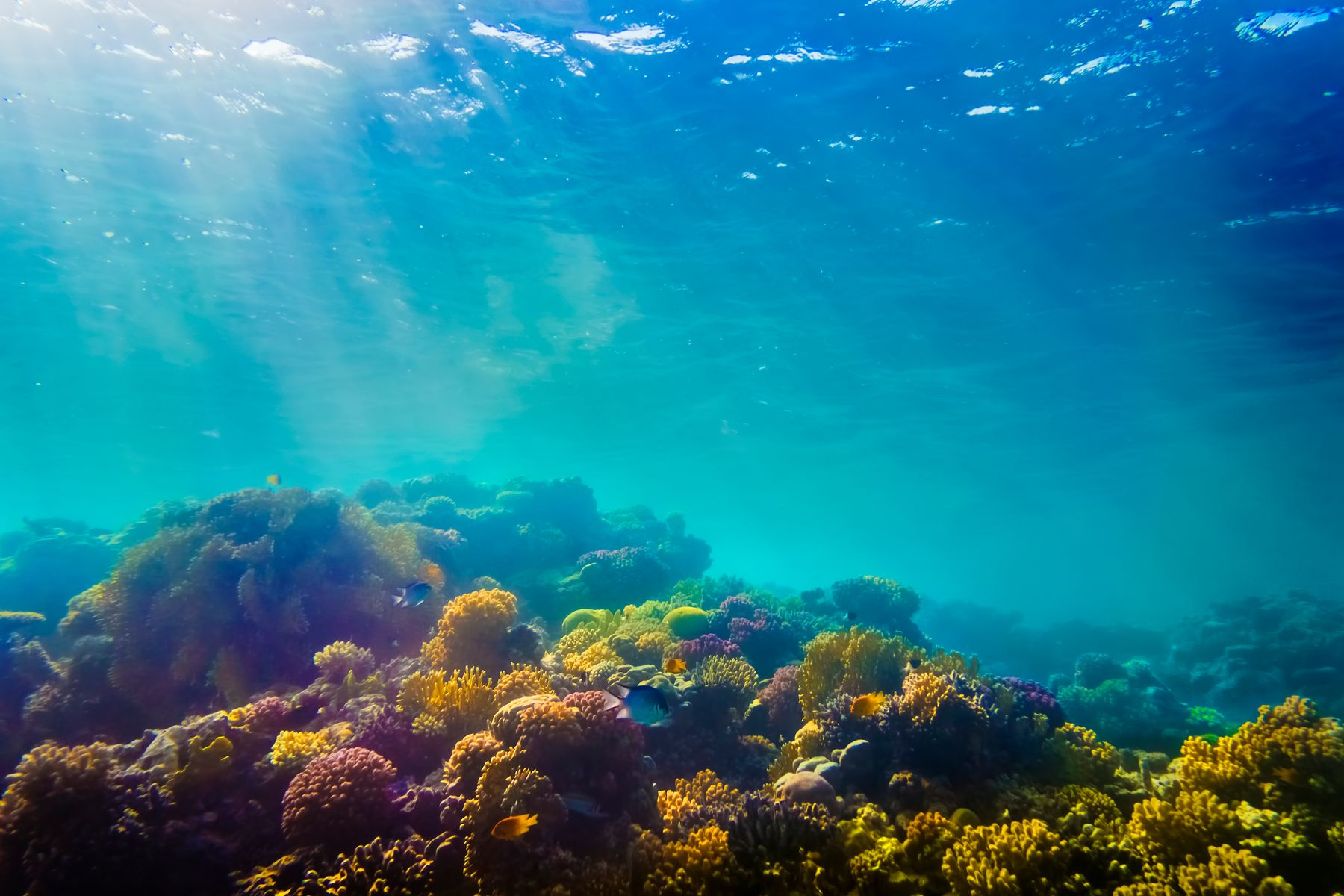 Najlepsze miejsca do nurkowania: Morze Czerwone, Egipt