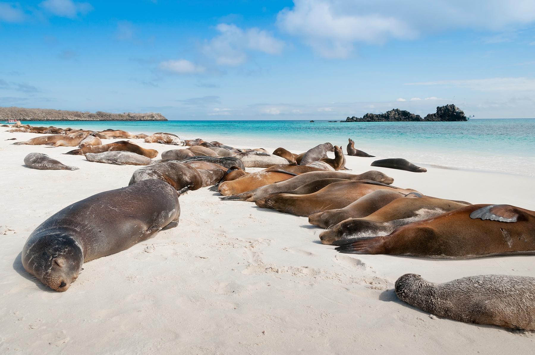 destinazioni da sogno - Galapagos