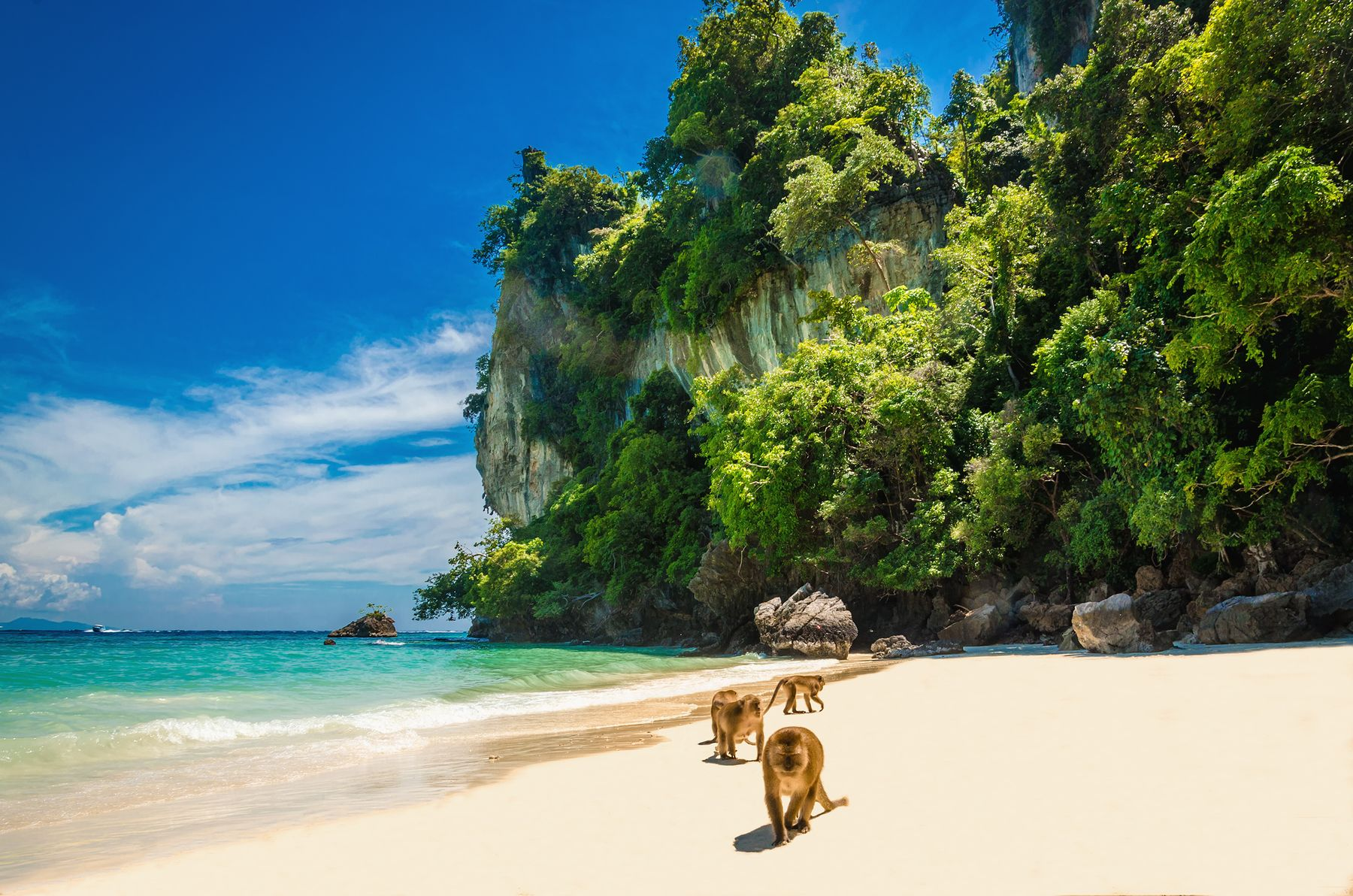 Monkeys in the sand, Phi Phi islands, Thailand - 12 of the most beautiful beaches in the world