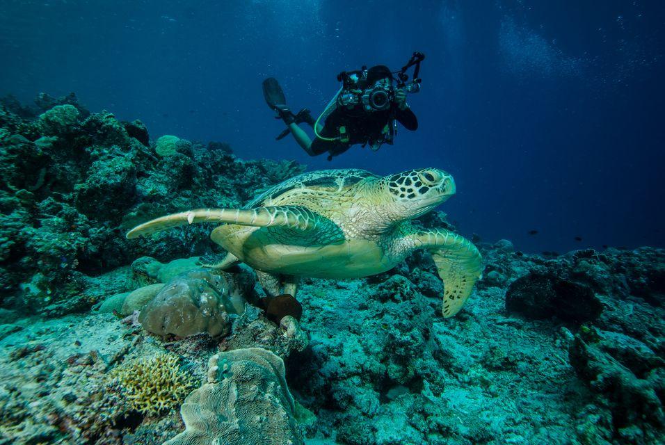 インドネシア デラワン島周辺の海 ウミガメ