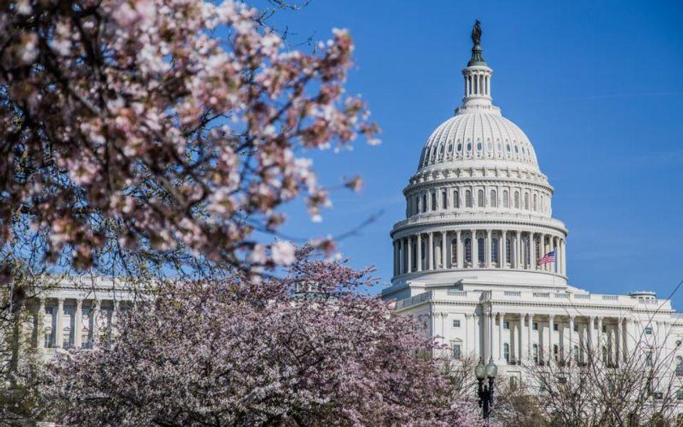 ワシントンDCの桜