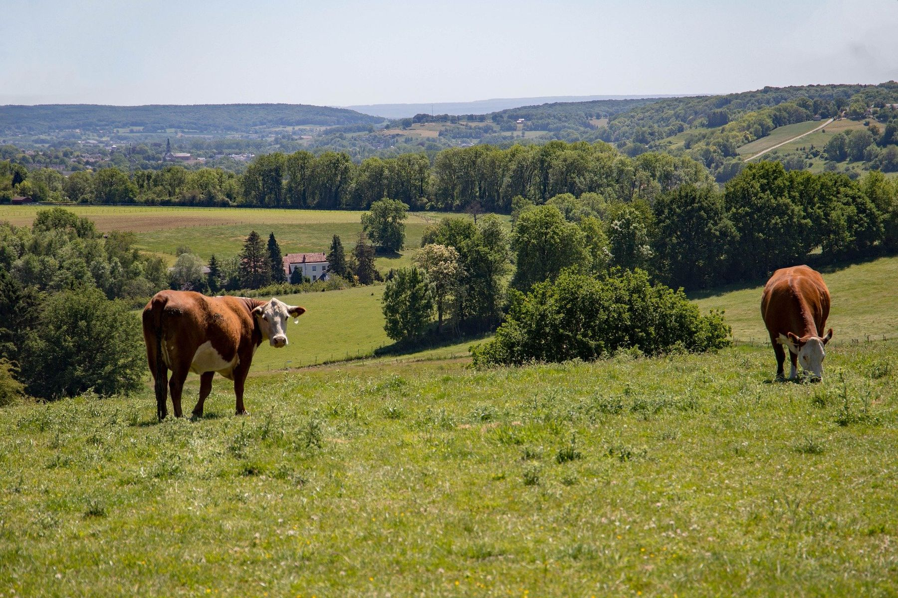 Vakantie in Nederland: Limburgse Heuvelland