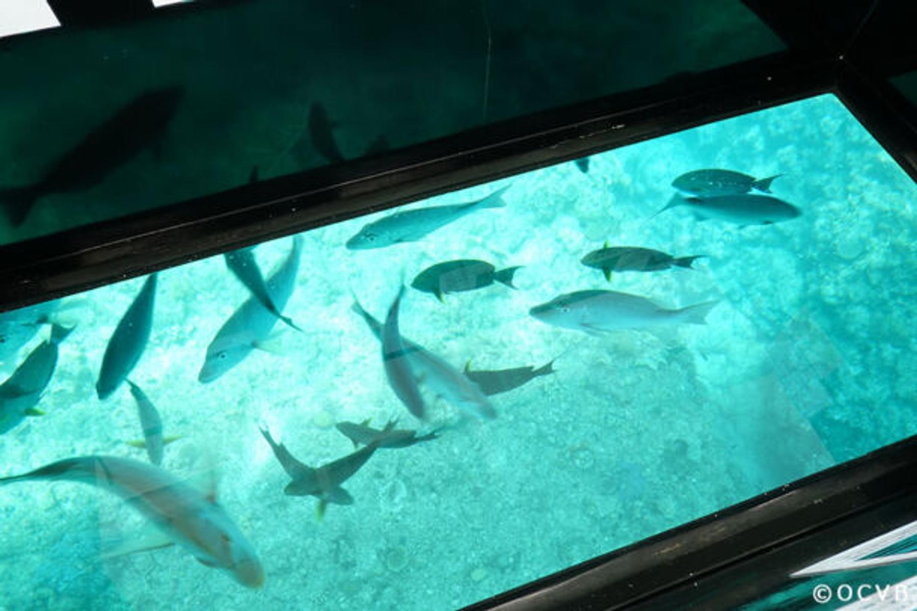 グラス底ボート ブセナ海中公園