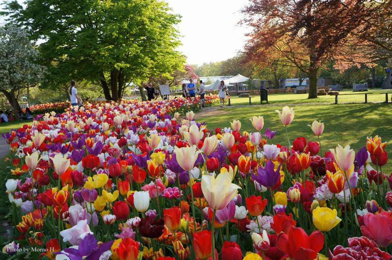 700万本もの色鮮やかに美しく咲き誇る様々なチューリップ